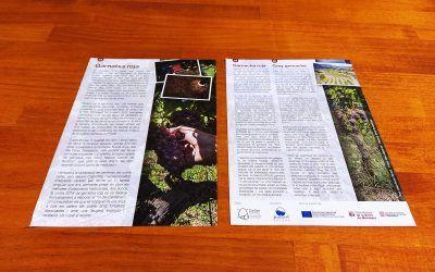 Publicamos un folleto sobre la Garnacha Roja